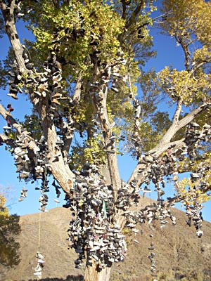 Shoe Tree, Fallon, Nevada